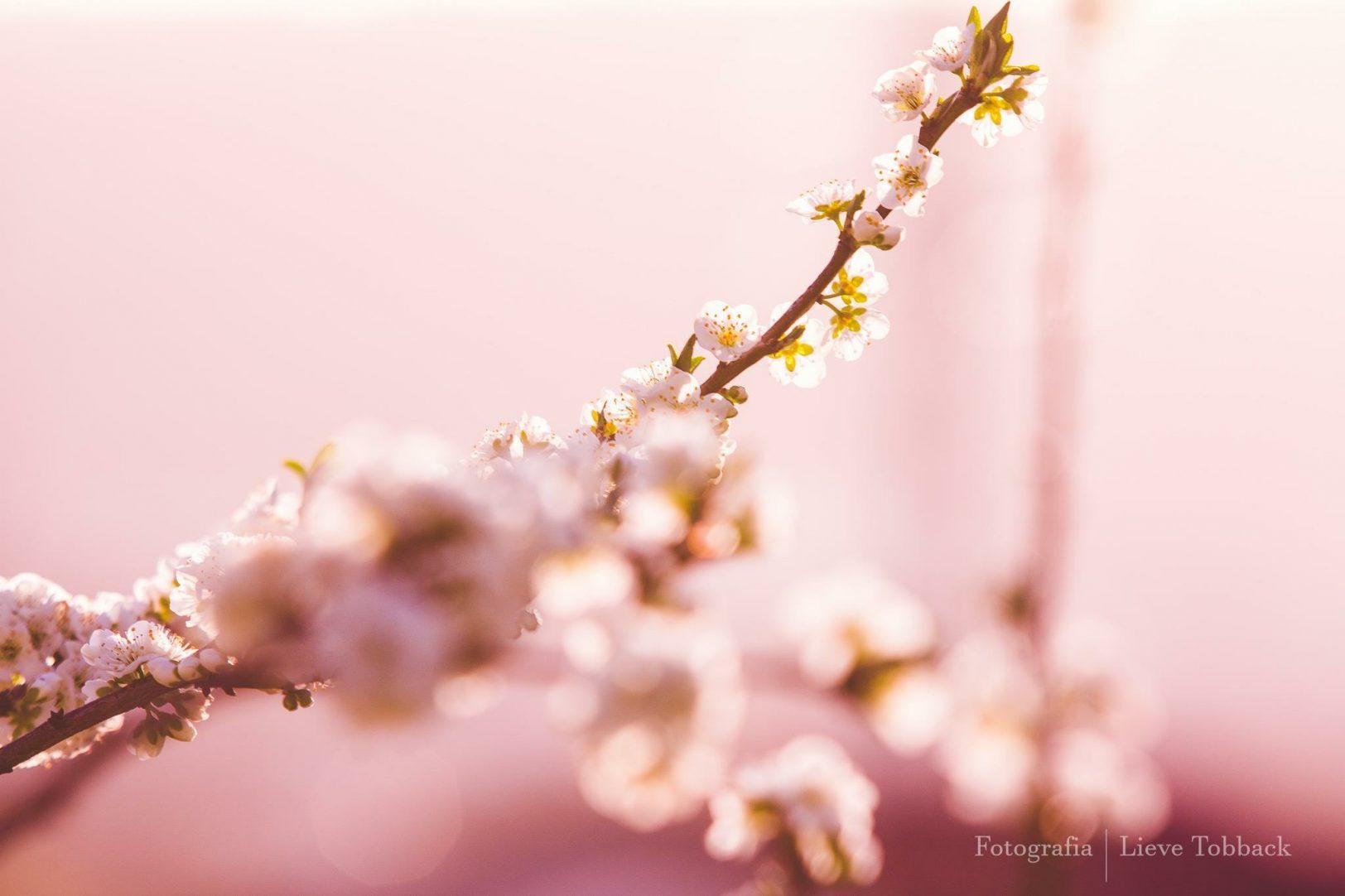 Primavera e suas dádivas